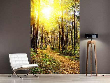 Photo Wallpaper Woodland Walk In The Autumn Sun