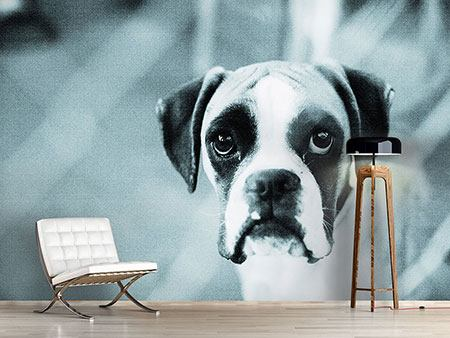 Photo Wallpaper Boxer