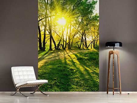 Photo Wallpaper Forest Path In Sunlight