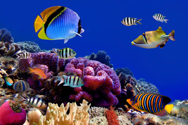 Fototapete Welt der Fische
