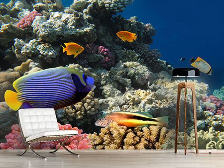 Photo Wallpaper The Aquarium