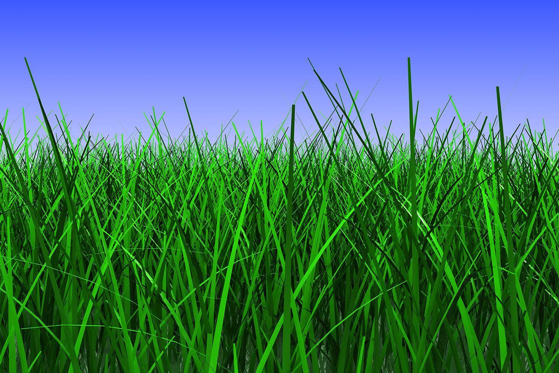 Fototapete Im Gras