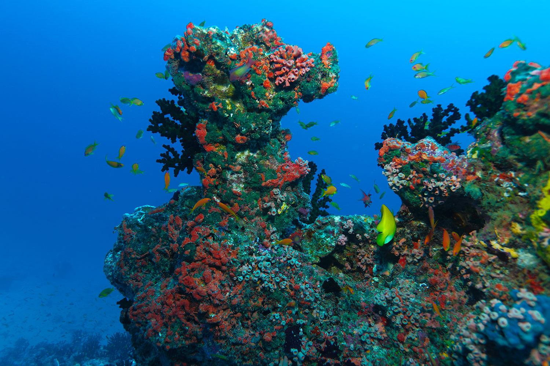 Fototapete Die Welt der Fische