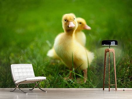 Photo Wallpaper Duckling