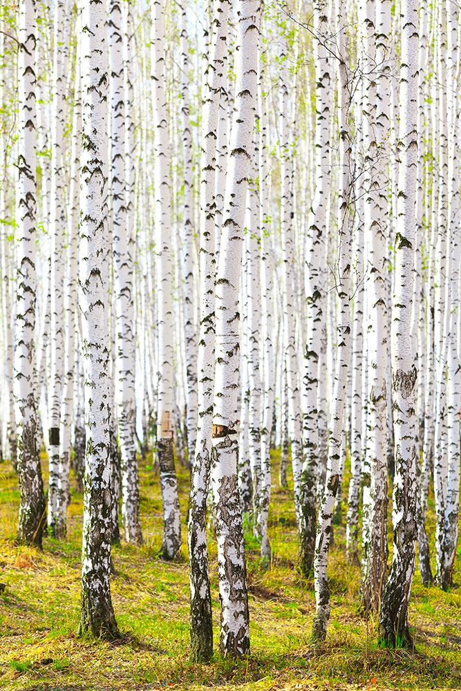 Frische Idee Zu Fototapete Natur Sammlung Von Wohndesign Idee