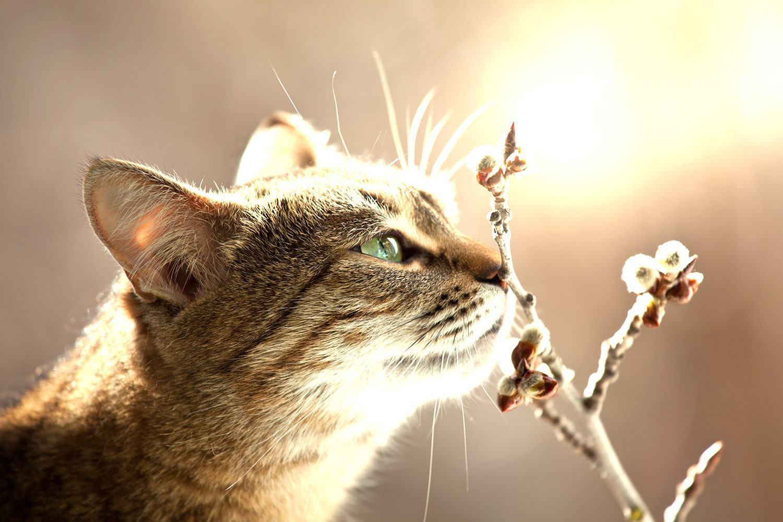 Fototapete Die Katze