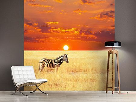 Photo Wallpaper  Zebra In Seregenti National Park
