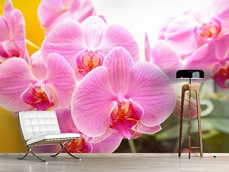 Photo Wallpaper Royal Orchid