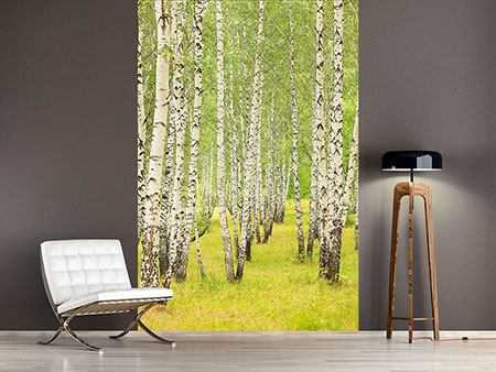 Photo Wallpaper The Birch Forest In Late Summer