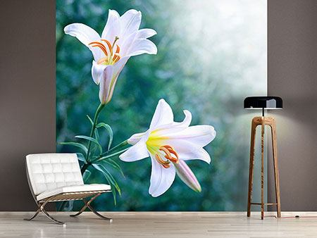 Photo Wallpaper White Lily Duo