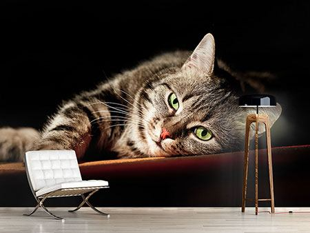 Photo Wallpaper Relaxed Cat