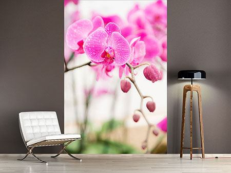 Photo Wallpaper Striped Orchid Flowers In Pink