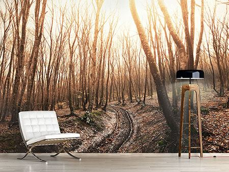 Photo Wallpaper The Bare Forest