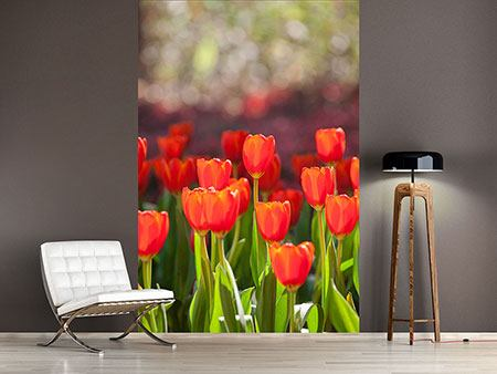 Photo Wallpaper The Red Tulip Bed