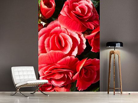 Photo Wallpaper Red Rose