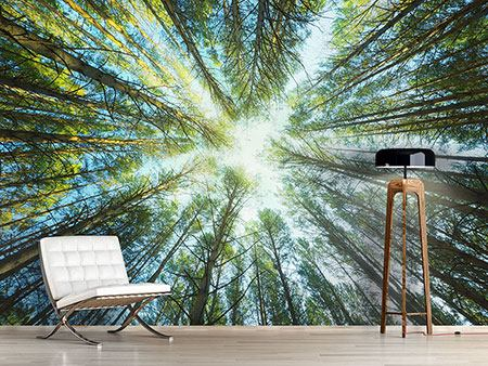 Photo Wallpaper Pine Forest