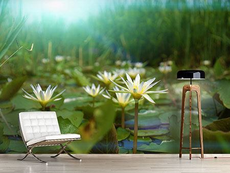 Photo Wallpaper Waterlily Pond
