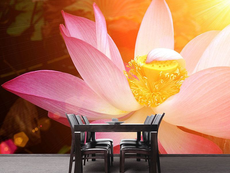 Photo Wallpaper Close Up Lotus