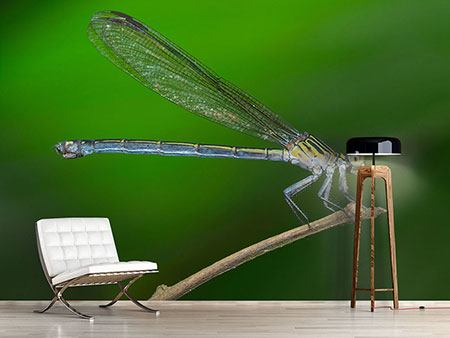 Photo Wallpaper The Dragonfly