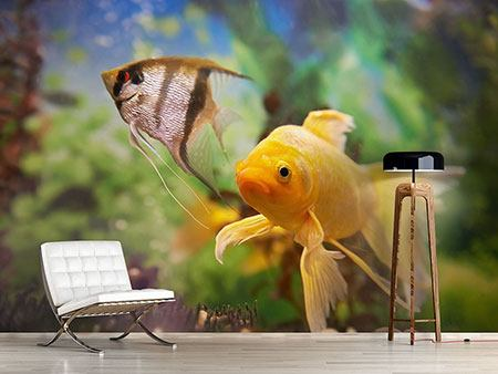 Photo Wallpaper Colorful Fish