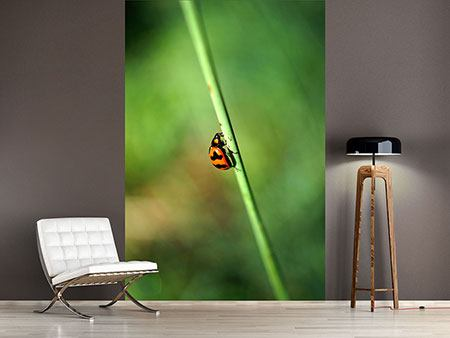 Photo Wallpaper The Ladybird