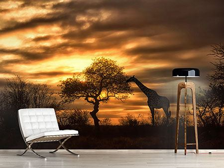 Photo Wallpaper African Dreams