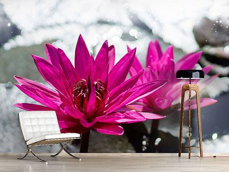 Photo Wallpaper Two Water Lilies In Pink