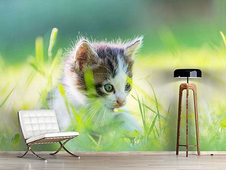 Photo Wallpaper Kitten