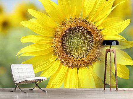 Photo Wallpaper The Flower Of The Sun