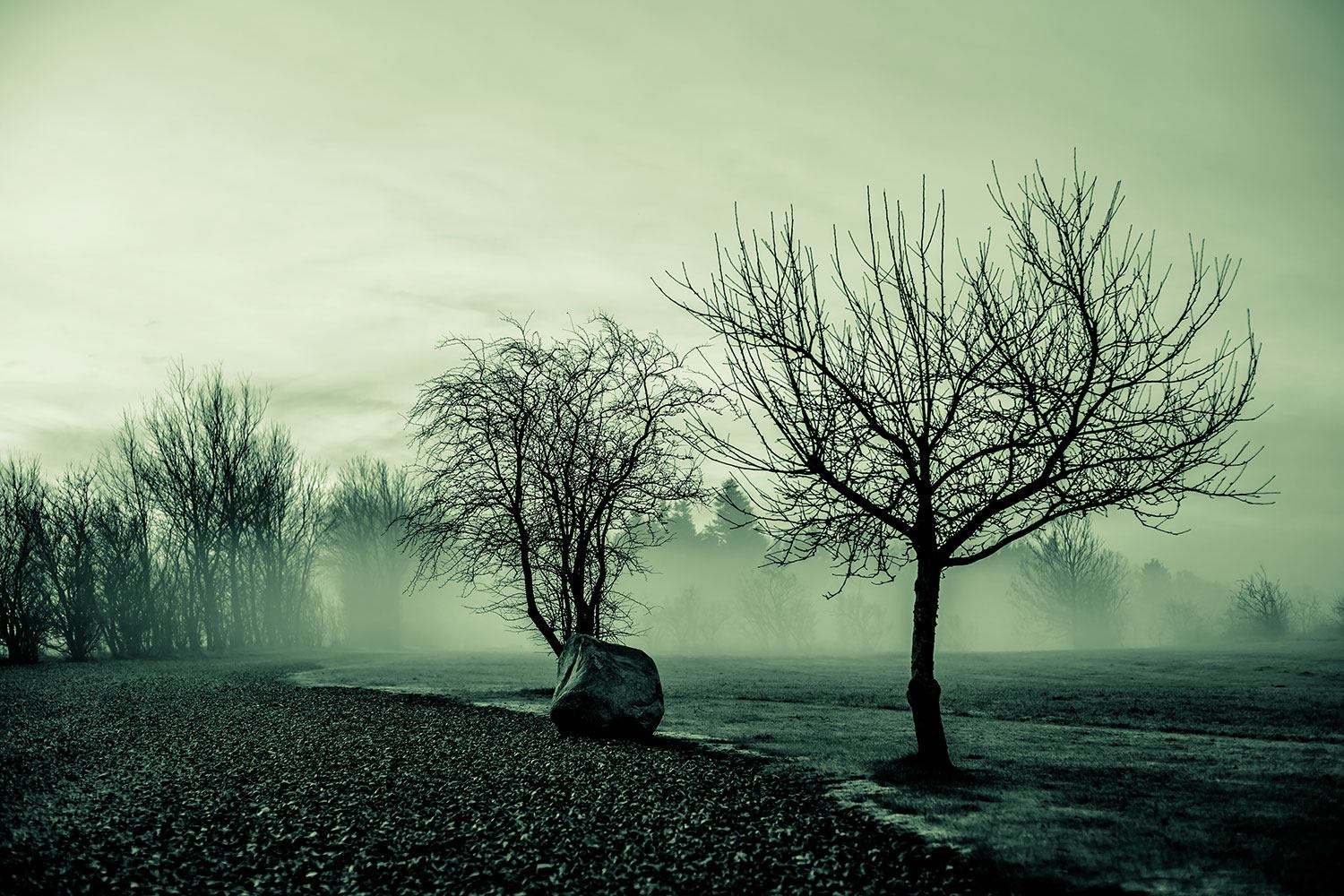 Photo Wallpaper Alluvial Forest In The Fog