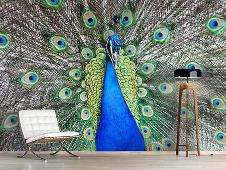 Photo Wallpaper Blue Peacock
