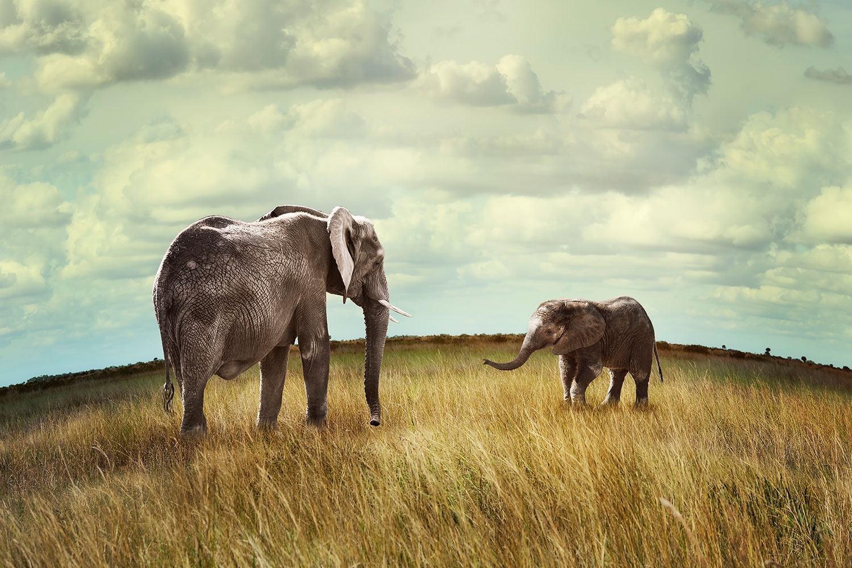 Fototapete Elefanten und Feng Shui