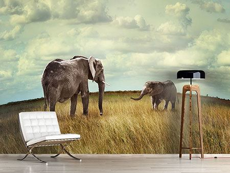 Photo Wallpaper Elephant And Feng Shui