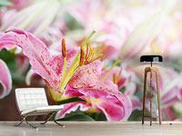 Photo Wallpaper Lilies In Dew