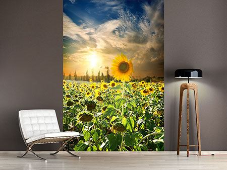 Photo Wallpaper Sunflowers In Sunset