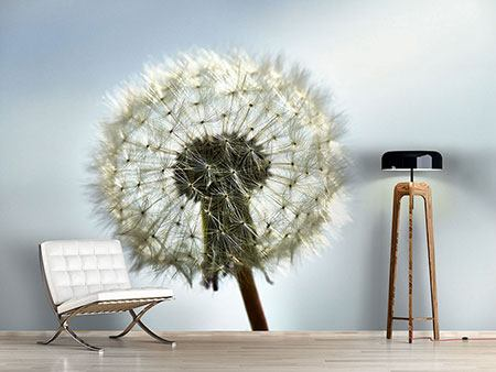 Photo Wallpaper Dandelion XXL
