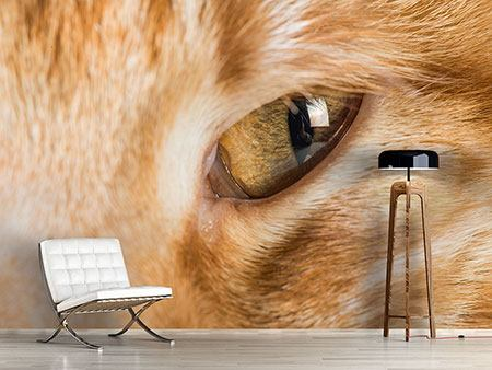 Photo Wallpaper Close Up Cat