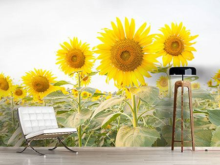 Photo Wallpaper The Sunflower Field