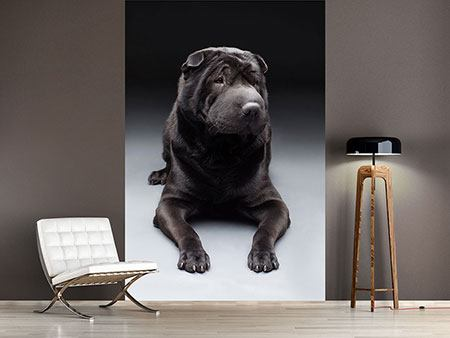 Photo Wallpaper Shar-Pei