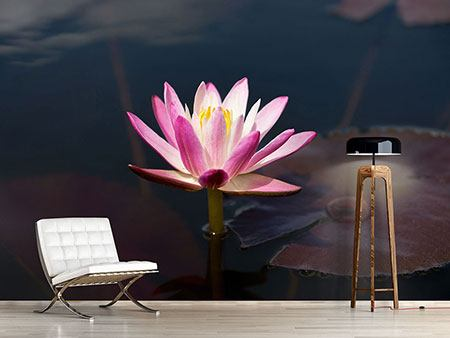 Photo Wallpaper Water Lily At Dusk