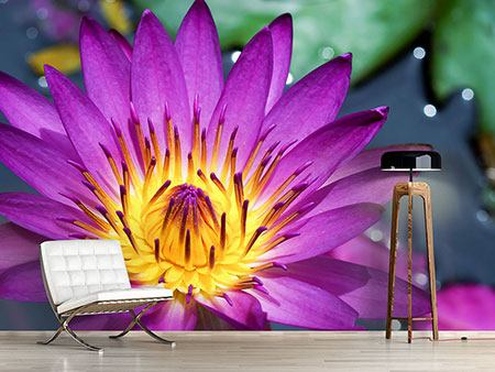Photo Wallpaper Macro Water Lily In Purple