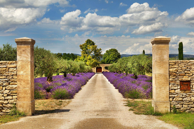 Fototapete Lavendel-Garten