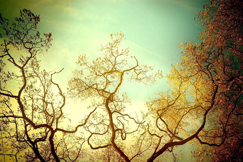 Fototapete Bäume im Herbst